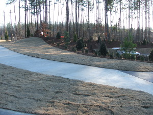 Commercial sod Raleigh NC